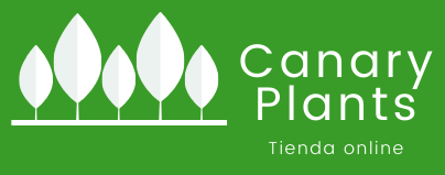 Canary Plants